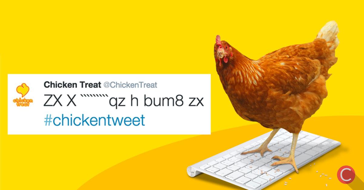 TWITTER: il primo pollo a gestire un account!
